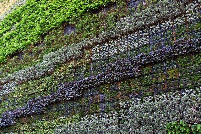 stěna rostlin